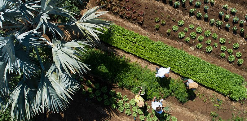 Growing own vegetables for local cuisine at the chateau garden