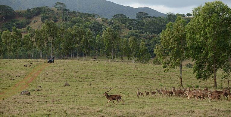 Explore the best kept faune and flora of Mauritius